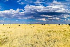 Prairie et ciel Photo libre de droits