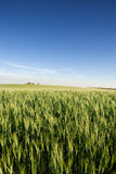Prairie Farmland Royalty Free Stock Photography