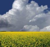 Prairie Fields And Blue Sky Stock Photo
