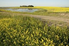 Prairie fields in Canada Royalty Free Stock Photo