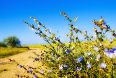 Prairie flowers. Prairie blue flowers with many white snails Royalty Free Stock Photo