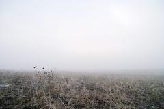 Prairie Fog Royalty Free Stock Image