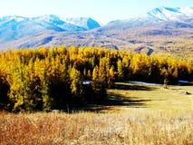 Prairie, forêt, montagne de neige Images stock