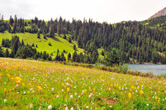 Prairie full of flowers ,High Mountain and Lake Cuopu Royalty Free Stock Images