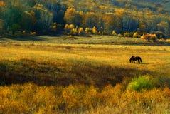 The prairie gold yellow autumn Royalty Free Stock Images