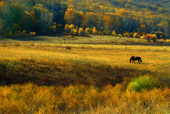 The prairie gold yellow autumn Royalty Free Stock Images