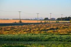 Prairie grain fields, Edmonton, Alberta, Canada. Flat grain fields of the western canadian prairies in Sturgeon County, near St Albert, Edmonton, Alberta stock photography