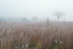 Prairie grande givrée d'herbe en brouillard Photo stock