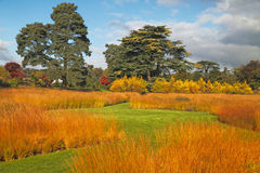 Prairie Grass. Autumn prairie grasses in a Staffordshire garden in England Stock Photo