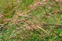 Prairie Grass Background Stock Photos