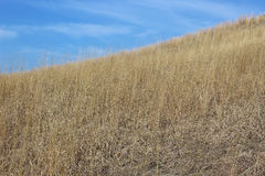 Prairie Grass. Brown prairie grass on a hillside with blue sky Stock Photos