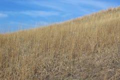 Prairie Grass Stock Photos