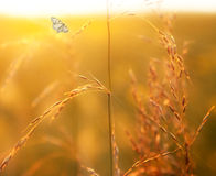 Prairie grass and butterfly Stock Image