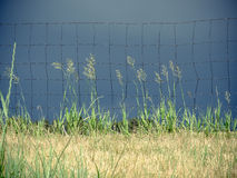 Prairie Grass and Dark, Stormy Sky Stock Photo