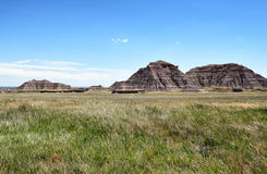 Prairie Grass Expanse in Badlands National Park. Badlands National Park. The park's 244,000 acres protect an expanse of mixed-grass prairie that support bison Stock Image