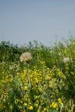 Prairie grass and flowers Stock Photo