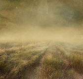 Prairie grasses with vintage color filters Stock Images
