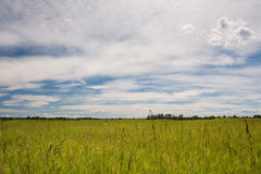 Prairie Grasslands. Prairie landscape of a grassy field with dramatic clouds Royalty Free Stock Images