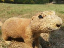 Prairie hond Royalty-vrije Stock Foto