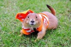 Prairie Hund Lizenzfreie Stockfotos