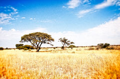 Prairie Kalahari Afrika Stock Foto's