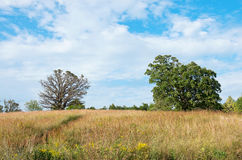 Prairie Landscape and Oak Trees Royalty Free Stock Photos