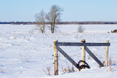 Prairie landscape. Snow covered farmland with a roll of barbed wire leaning against a fence Stock Images