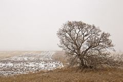 Prairie Landscape in Winter Royalty Free Stock Photos
