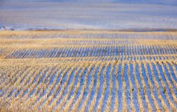 Prairie Landscape in Winter Stock Images