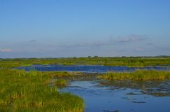 Prairie Marsh Royalty Free Stock Photography