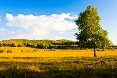 Prairie mongole photographie stock libre de droits