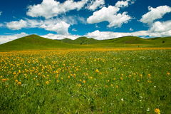 Prairie. Mongolia under the blue sky stock images