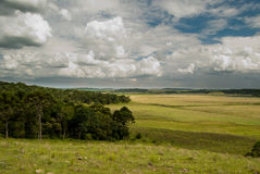 Prairie. Native grassland and Araucaria forest in Santa Catarina, southern Brazil Stock Photo