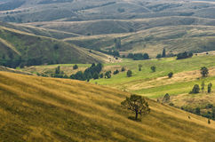 Prairie path through hillsides with dry vegetation Stock Images