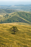 Prairie path through hillsides with dry vegetation Royalty Free Stock Photography