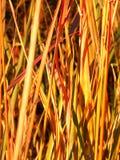 Prairie Plant Background Stock Photos