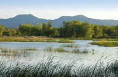 Prairie Pond With Grasses Stock Photography
