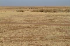 Prairie sèche dans l'étendue du Soudan photographie stock libre de droits