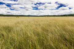 Prairie Seven Star Lake. The wind and the long grass, very impressive royalty free stock photo