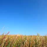 Prairie and sky backgrounds Royalty Free Stock Photo
