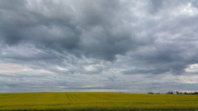 Prairie sky. Clouds racing across a prairie field of canola Stock Images