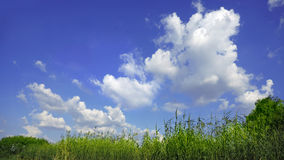 Prairie sky and fluffy clouds Royalty Free Stock Image