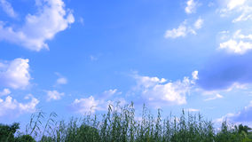 Prairie sky and fluffy clouds 03 Royalty Free Stock Photo