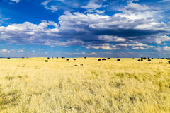 Prairie and sky. Panoramic view of the prairie in Wupatki National Monument in Arizona. The sky is blue with some clouds Royalty Free Stock Photo
