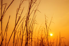 Prairie sky and sun in the evening. Royalty Free Stock Images
