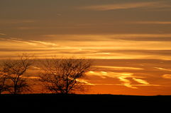 Prairie sunset. Beautiful orange sunset over central illinois with rugged trees and hint of clouds Stock Images
