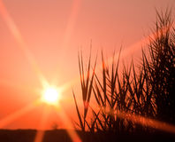 Prairie Sunset. Sun rays beam through wild prairie grass at sunset royalty free stock photos