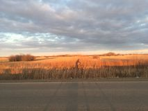 Prairie Sunset Biking! Royalty Free Stock Photos