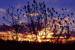 Prairie Sunset Landscape Illinois. Brilliant colors of sunset silhouetted through prairie plants in northern Illinois Stock Images