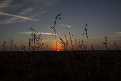 Prairie sunset. In late evening sky Royalty Free Stock Image